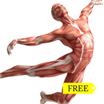 VorleX Muscle System  2.01 PRO free